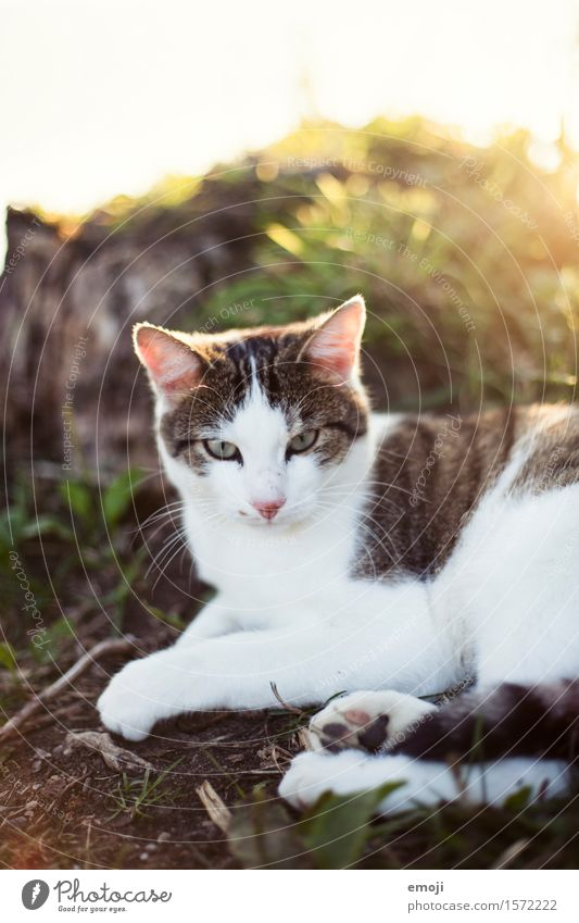favourite place Beautiful weather Garden Meadow Animal Pet Cat 1 Cuddly Warmth Colour photo Exterior shot Day Shallow depth of field Animal portrait