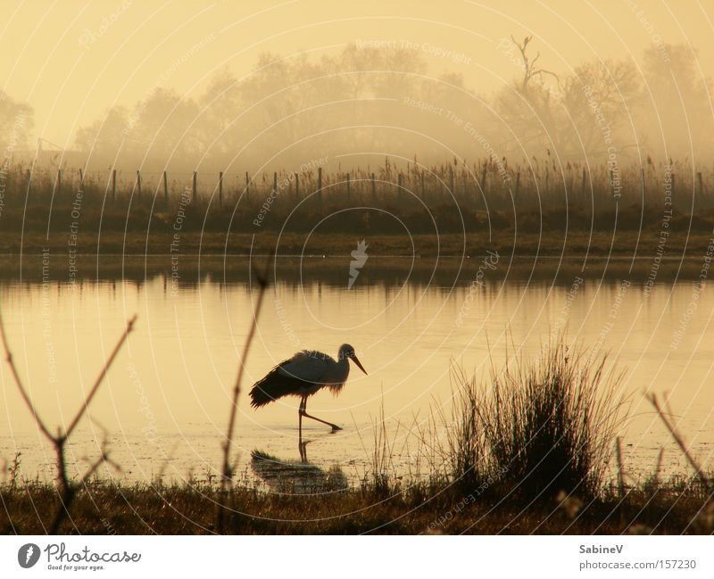Nature Beach Lake Bird Coast France Pond Physique Haze Sepia Stork Animal Sepia colour Moor lake