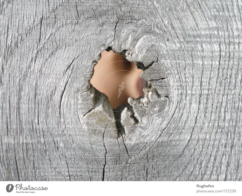There's nothing in it? Yes, it is! Face Knothole Hollow Looking Gray Wood Vista Hide growing rings tree rings