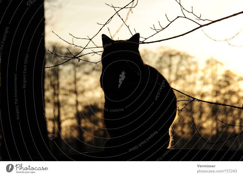 Sky Tree Sun Winter Cat Safety Mammal Twig Nature Evening sun