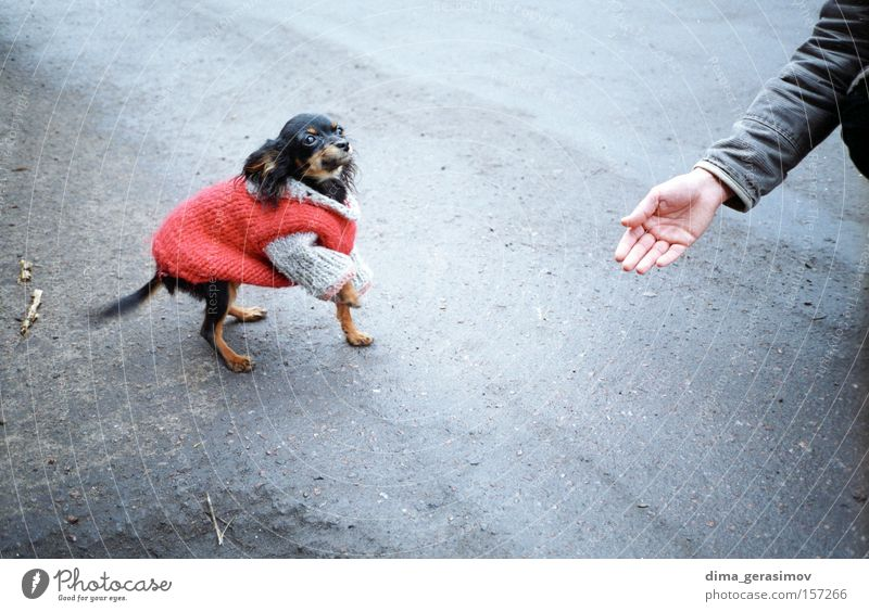 Dog 2 Animal Mammal Street Hand Food Meal Red Asphalt Fear Emotions Tallinn Passion Joy Colour feeling sense Exterior shot