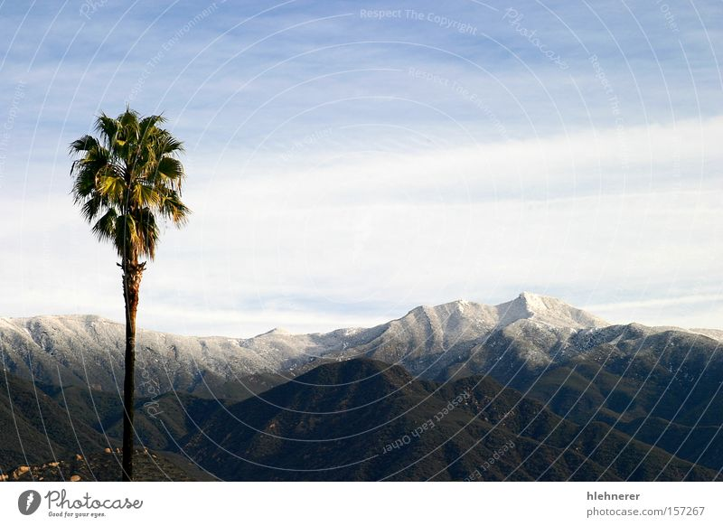 Southern California Snow Nature Landscape Clouds Mountain Travel photography Sky Tourism Winter Cold White Panorama (View) Tree scenery palm Large