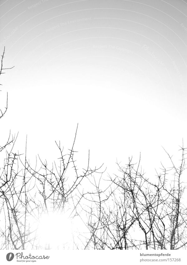 Sky Sun Cold Bushes Branch Twig Thorn