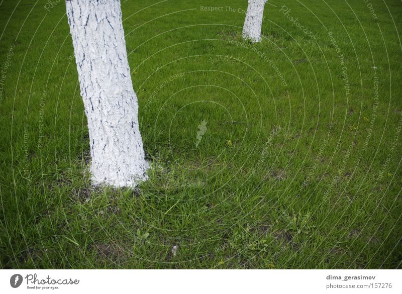 Green Nature White Tree Summer Colour Grass Strange Moscow