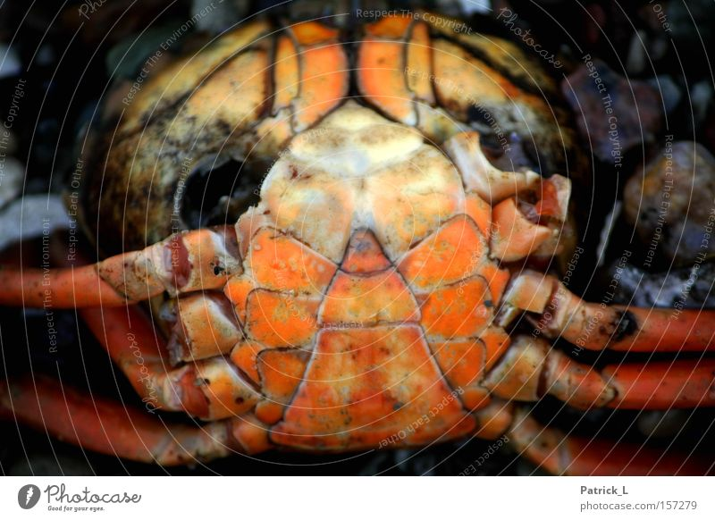 Water Winter Animal Death Sadness Orange Grief Transience Distress Baltic Sea Helpless Compassion Shellfish