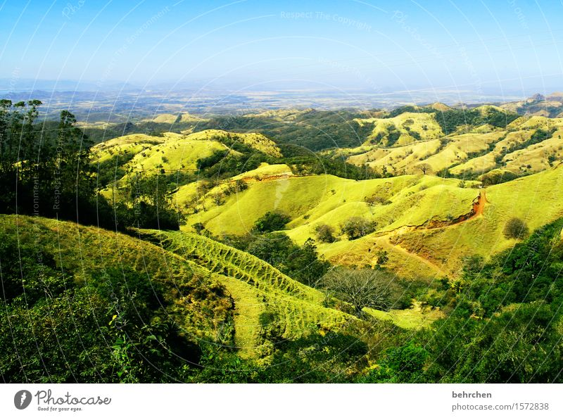 on the way... Vacation & Travel Tourism Trip Adventure Far-off places Freedom Nature Landscape Sky Horizon Spring Summer Beautiful weather Plant Tree Grass