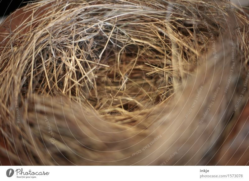 Easter nest Nest Straw Easter egg nest Simple Near Round Brown Empty Love and security Nest-building Colour photo Interior shot Close-up