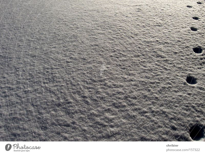 Winter Animal Snow Lanes & trails Cat Going Animal foot Tracks Footprint Mammal Paw Creep