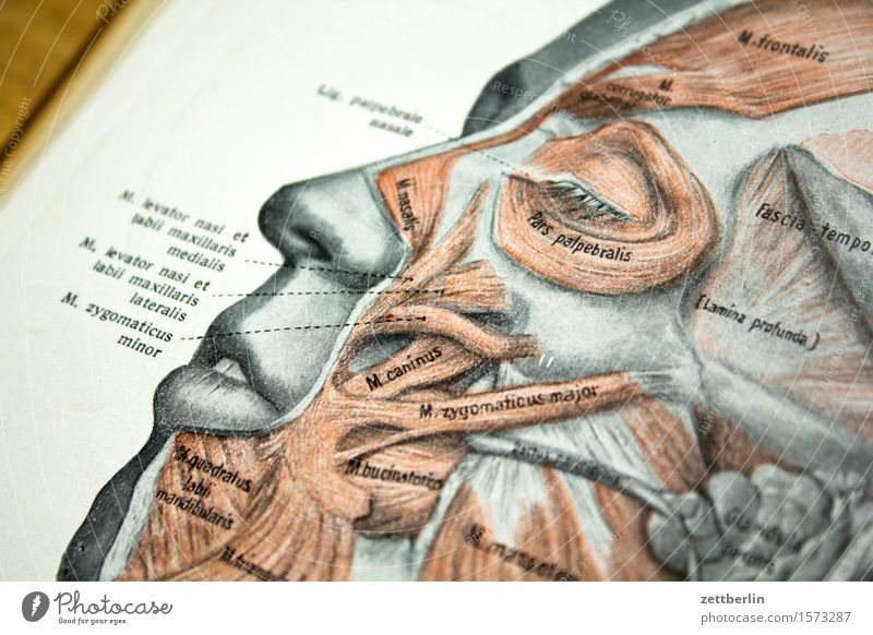 face Anatomy Doctor Book Illustration Body Parts of body Head School books Medication Human being Face Eyes Nose Mouth Forehead Musculature Fiber