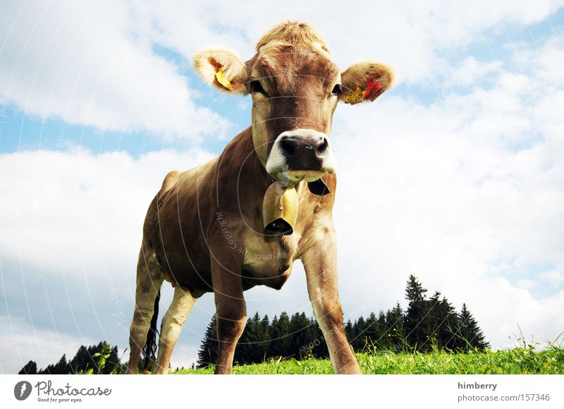 Cattle Agriculture Cow Mammal Organic produce Organic farming Animal Lawnmower Dairy Products Dairy cow Milk production