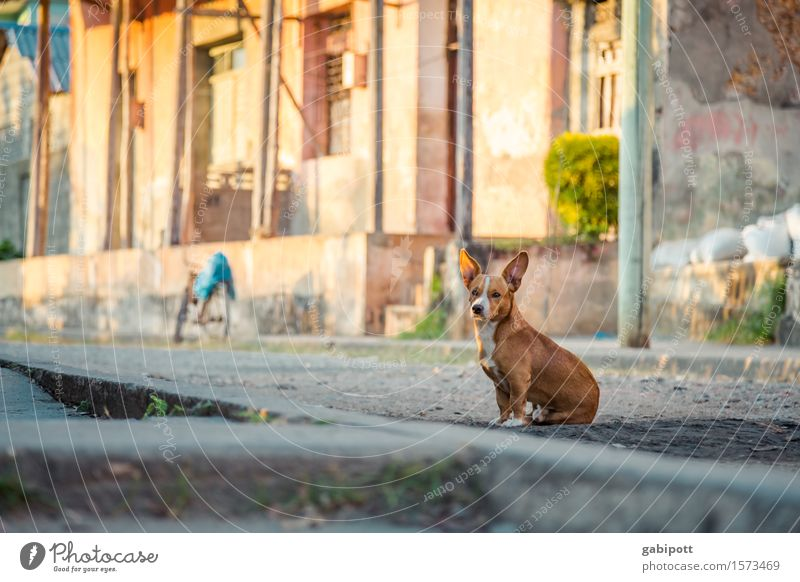 cuba Baracoa Cuba Village Small Town Outskirts Old town House (Residential Structure) Places Wall (barrier) Wall (building) Facade Animal Pet Dog 1 Observe