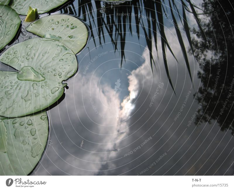 Sky in the pond Water lily Clouds Bad weather sign
