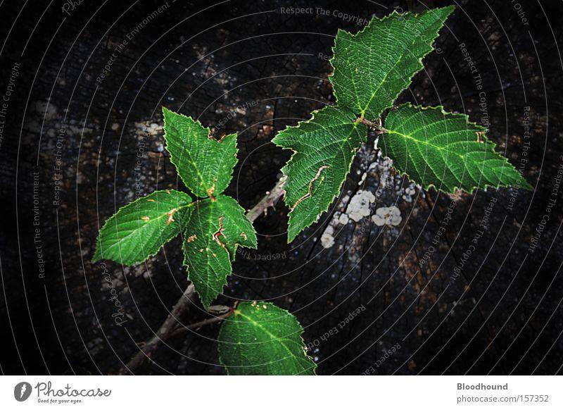 Nature Old Tree Green Plant Leaf Black Animal Environment Sadness Grief Gloomy Dry Distress Thorny Tree bark