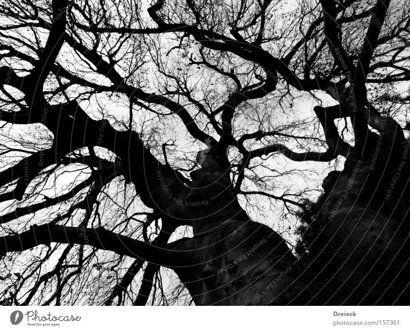 Nature Tree Leaf Black Dark Autumn Sand Landscape Large Earth Might Growth Bushes Branch Tree trunk Treetop