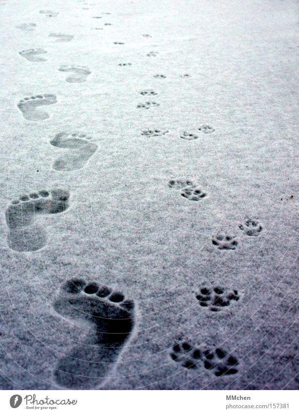 in twos Barefoot Catwalk Human being Animal Footprint Toes Paw Cold Winter Feet Snow Ice