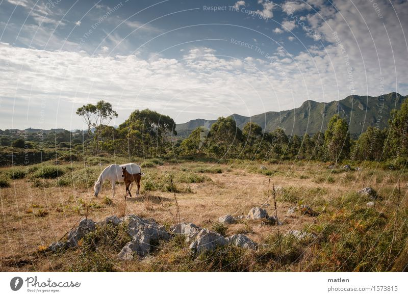 summer Landscape Plant Sky Clouds Horizon Summer Weather Beautiful weather Tree Grass Bushes Meadow Hill Rock Mountain Deserted Animal Pet Horse 2 Baby animal