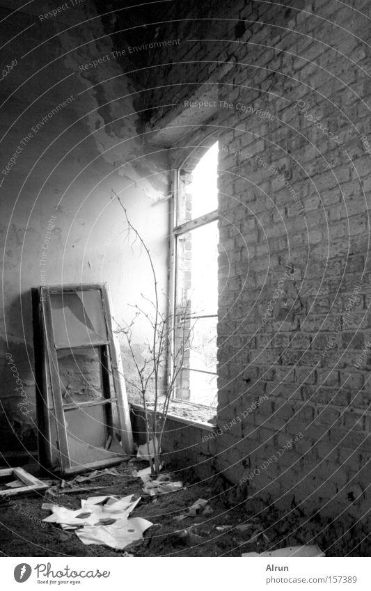 Lonely window Window Window pane Broken Light Wall (barrier) Lighting Old Room Bushes Derelict