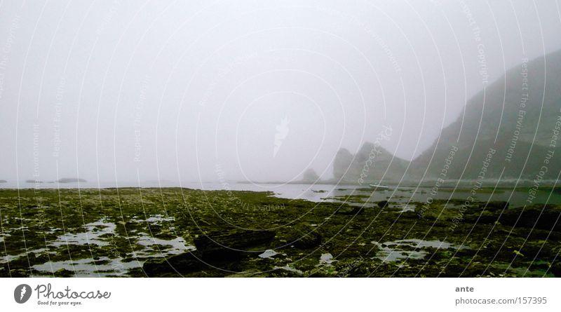 Ocean Beach Coast Fog Bay Mystic Eerie Cliff New Zealand Spooky Bad weather