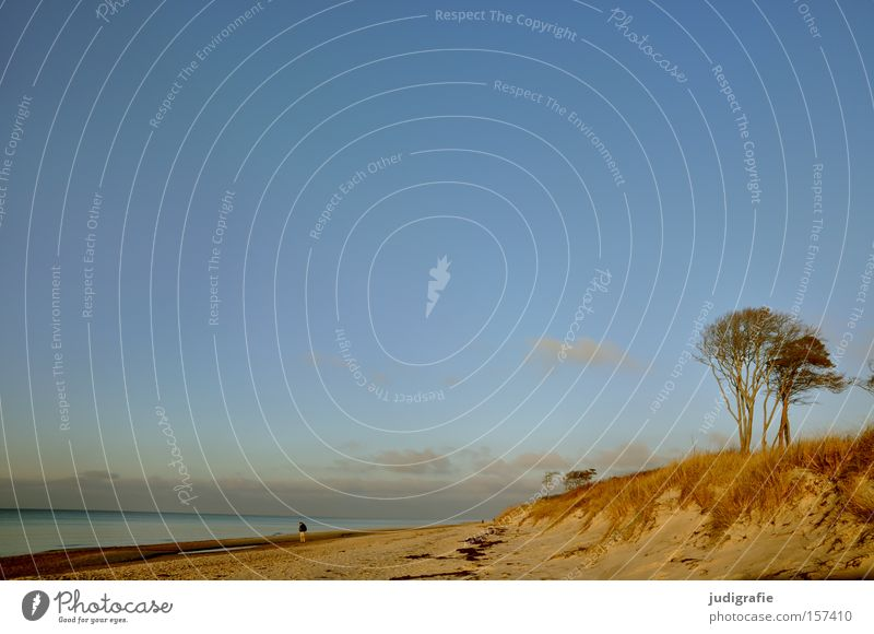 Human being Man Nature Sky Tree Ocean Beach Vacation & Travel Calm Loneliness Colour Relaxation Coast Environment Beach dune Baltic Sea