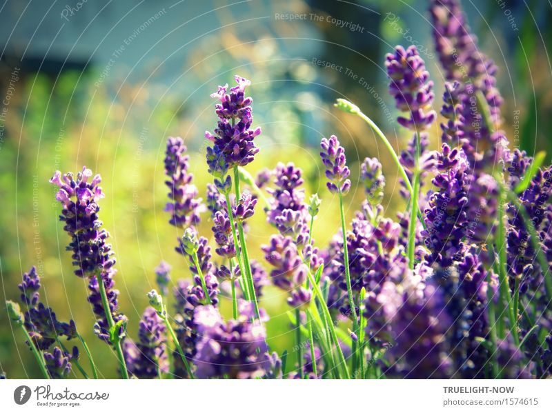 He's coming, he's coming! Happy Wellness Harmonious Well-being Contentment Senses Relaxation Leisure and hobbies Summer Sun Garden Sunlight Flower Blossom