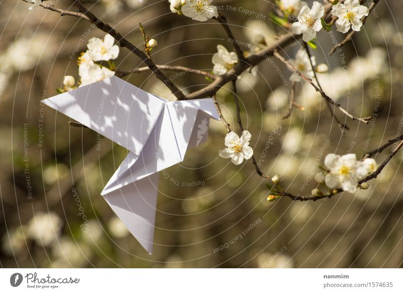 White origami dove bird hanging on blooming spring plum tree Nature Blue Beautiful Green Colour White Tree Flower Yellow Love Blossom Spring Lifestyle Happy Art Garden