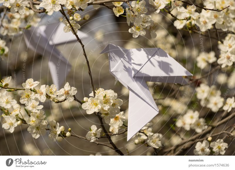 White origami dove birds hanging on blooming spring plum tree Nature Blue Beautiful Green Colour Tree Flower Yellow Love Blossom Spring Lifestyle Happy Art