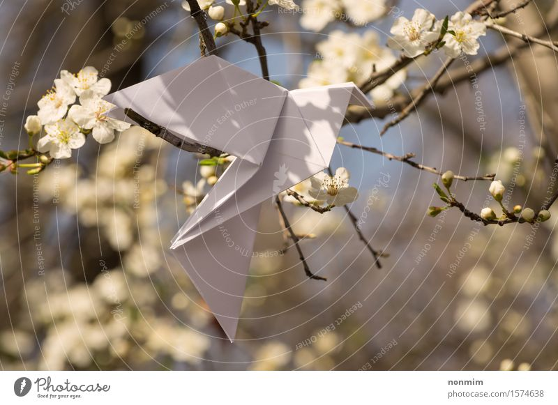 White origami dove bird hanging on blooming spring plum tree Nature Blue Beautiful Green Colour Tree Flower Yellow Love Blossom Spring Lifestyle Happy Art