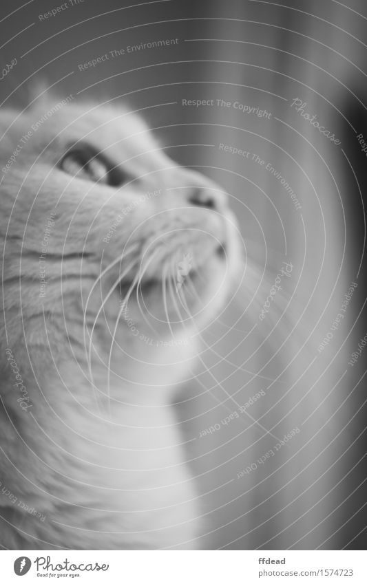 Black and white cat portrait Animal Pet Cat Animal face 1 White Curiosity Whisker detail Black & white photo Interior shot Close-up Deserted Day Shadow Blur