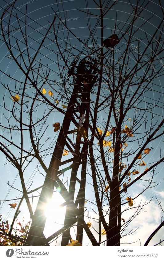 autumn stream Autumn Leaf Sky Lamp Electricity pylon Sun Twig Idyll Seasons Tree Transience Warmth Beautiful Esthetic Nature Life Detail