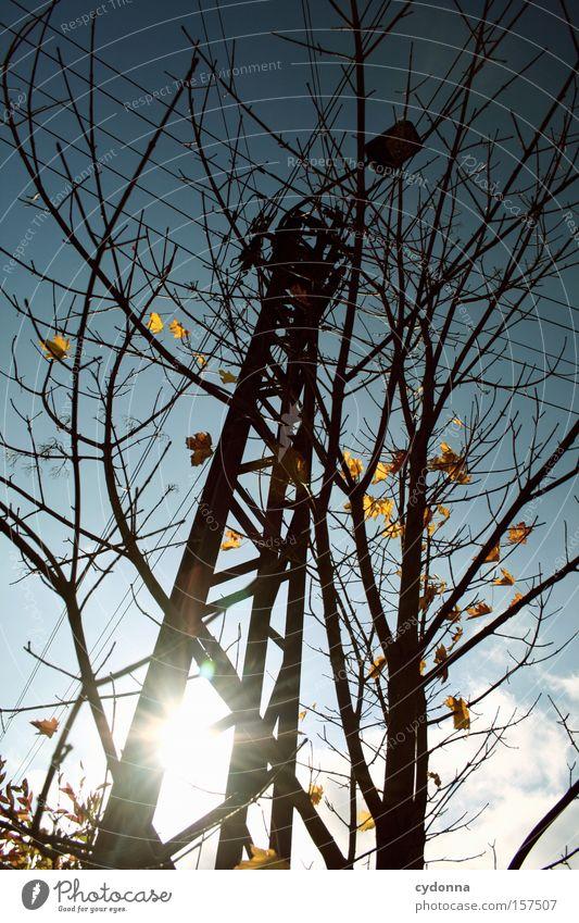 Nature Beautiful Sky Tree Sun Leaf Lamp Life Autumn Warmth Esthetic Transience Idyll Seasons Electricity pylon Twig