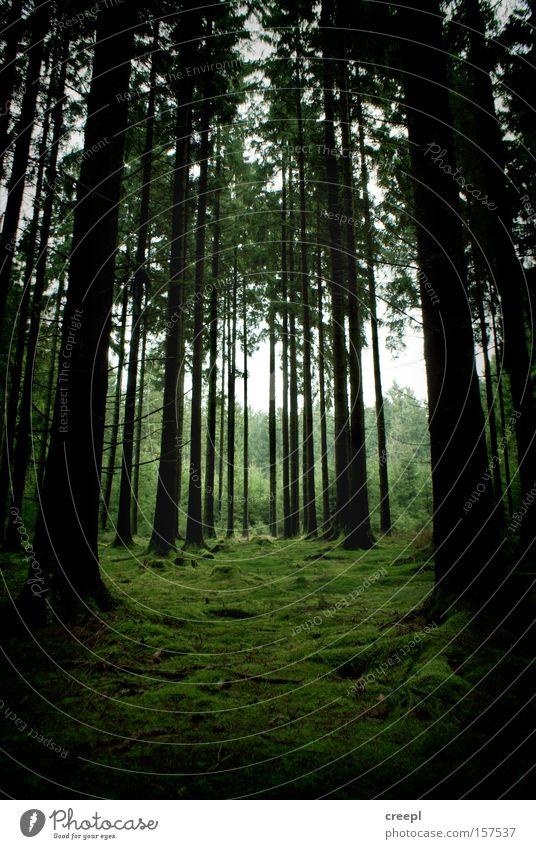 symmetry Forest Nature Green Tree Moss Symmetry Westerwald Loneliness
