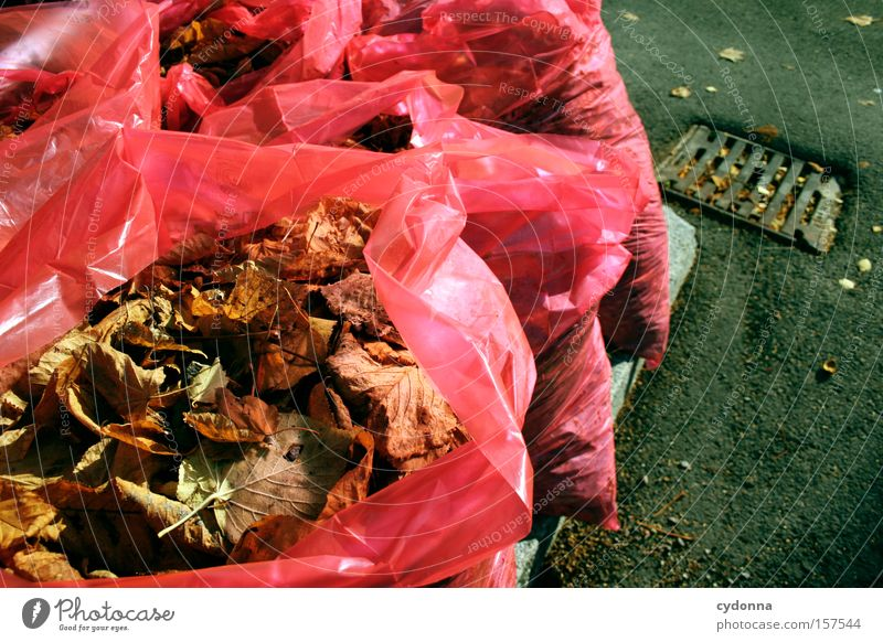 Provided Autumn Leaf Multicoloured Seasons Transience Nature Life Death Paper bag Plastic Packaging Far-off places Trash Cheap Obscure removal