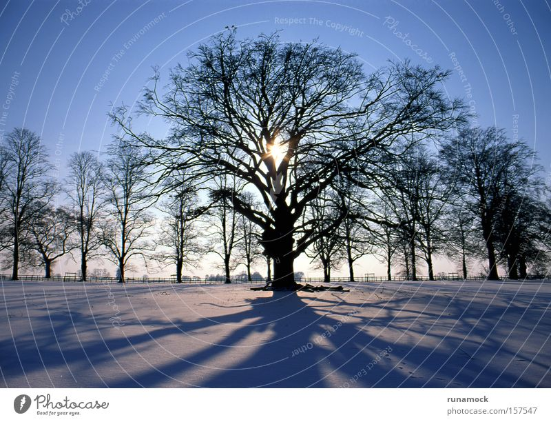 Sunset in winter Tree White Snow Winter Light (Natural Phenomenon) Ice Landscape Cold Forest Plant light effect seasonal polar Silhouette