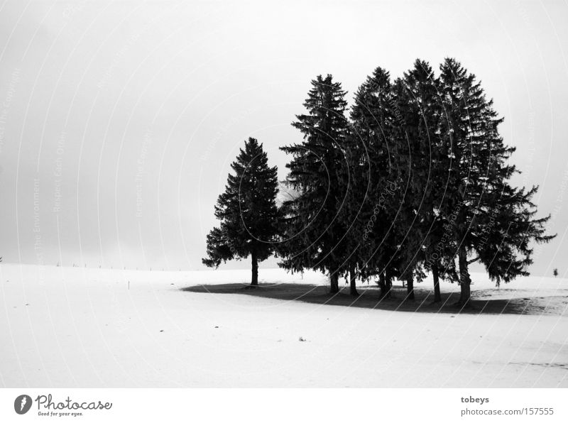group snuggling Winter Snow Ice Frost Tree Forest Freeze Cold Loneliness Black & white photo
