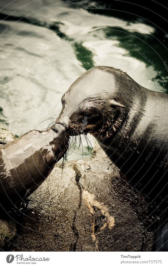 Water Ocean Love Kissing Longing Zoo Damp Narrow Mammal Infatuation Intimacy Loyalty Caresses Affection Seals Harbour seal