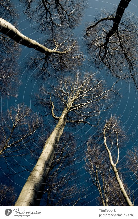 Sky Nature Blue Tree Loneliness Forest Dark Fear Tall Branch Mysterious Twig Mystic Panic Height Spooky
