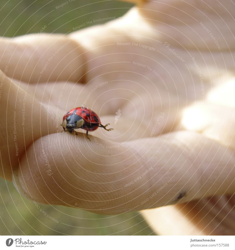 Hand Joy Happy Spring Fingers Safety Trust Insect Beetle Safety (feeling of) Ladybird Gymnastics Seven-spot ladybird