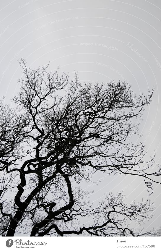 Tree with heart Branch Twig Winter Bleak Dreary Gloomy Silhouette Fantasy Heart Ruffled Treetop View to the sky