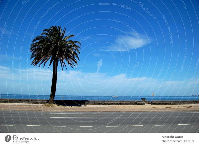 Sky Water Ocean Beach Clouds Relaxation Street Coast Highway Palm tree Australia Promenade Melbourne