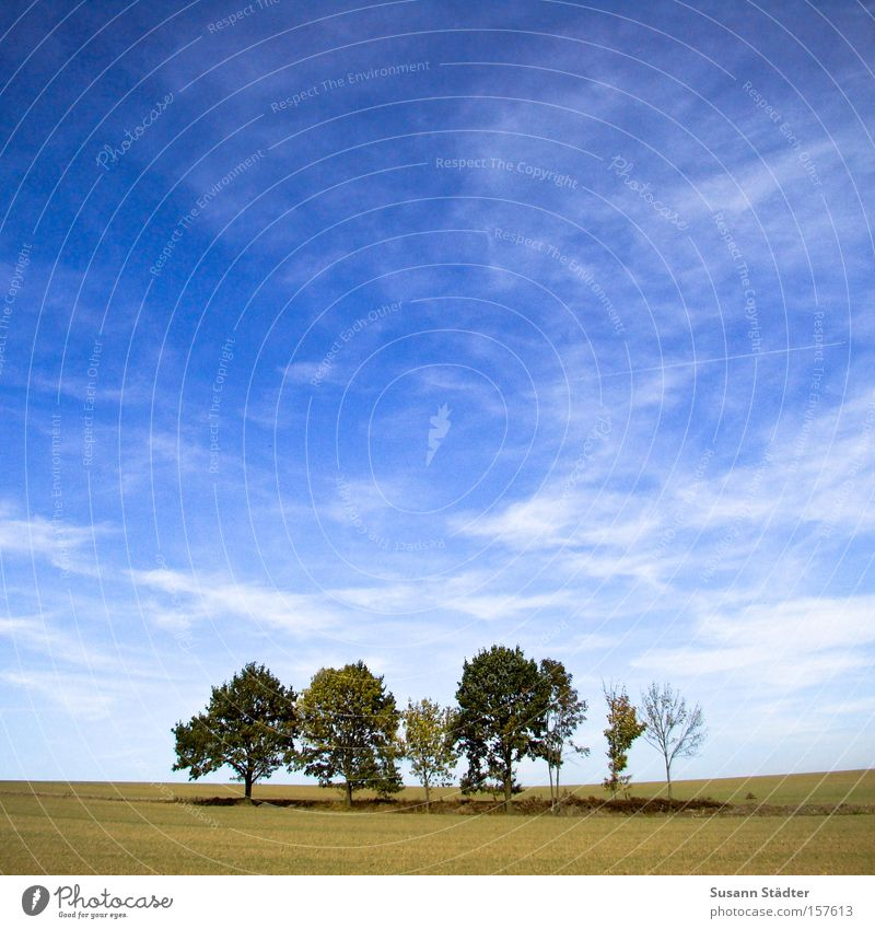 Sky Tree Plant Loneliness Meadow Landscape Empty Middle Pasture Willow-tree Willow tree Badlands Sparse Summery