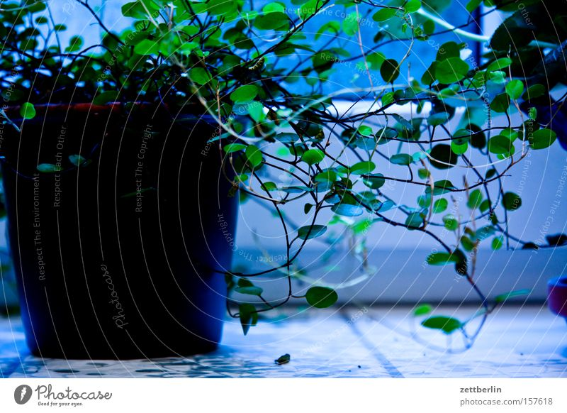 Green Plant Decoration Living or residing Flowerpot Houseplant Photosynthesis Leaf green