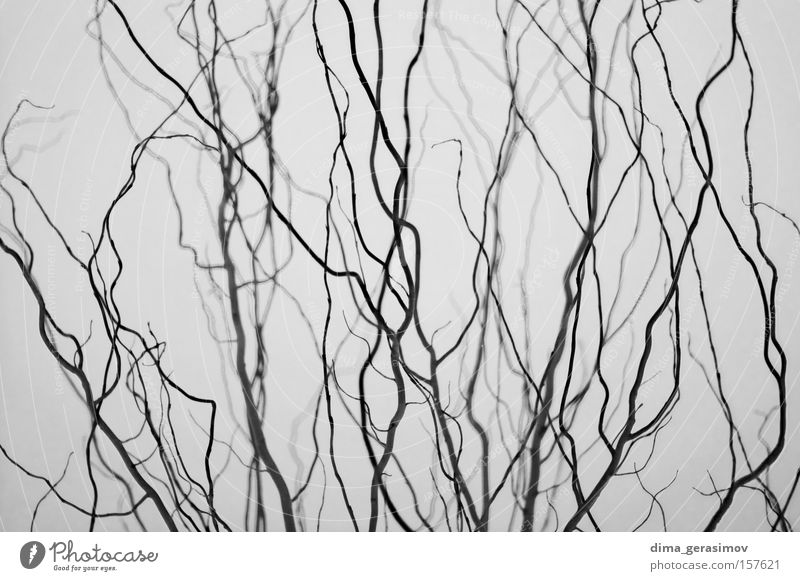 Branches 1 Nature Plant Street Colour Gray Brain and nervous system