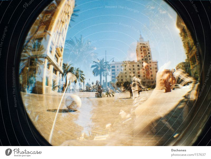 I'LL GIVE YOU A HISS. Vacation & Travel Sun Joy Palm tree Spain South Warmth Summer Hot Lomography Fisheye