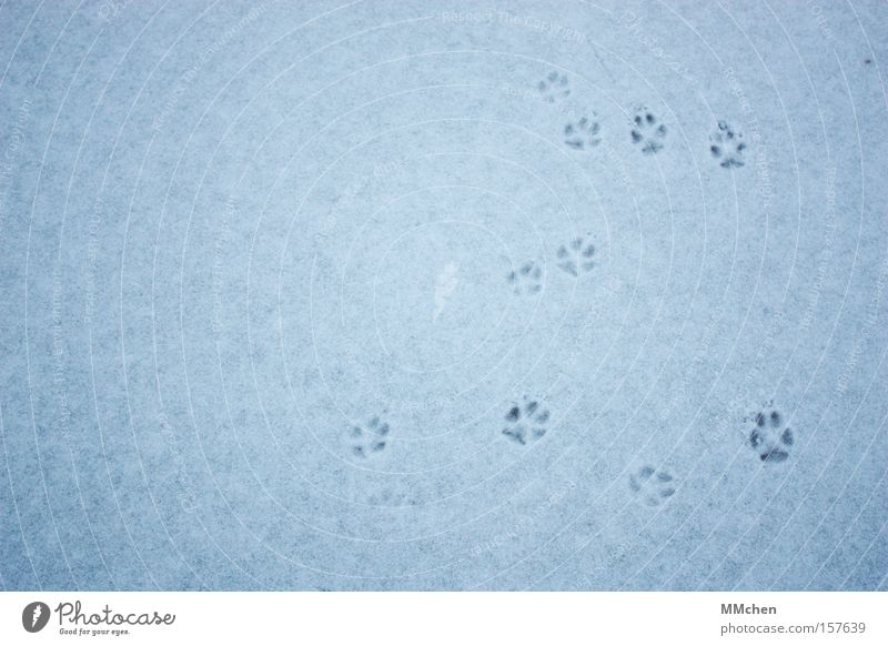 CATWALK Barefoot Animal Footprint Toes Paw Cold Winter Animal tracks Class outing Disorientated Cat Dog Mammal Feet Snow Ice