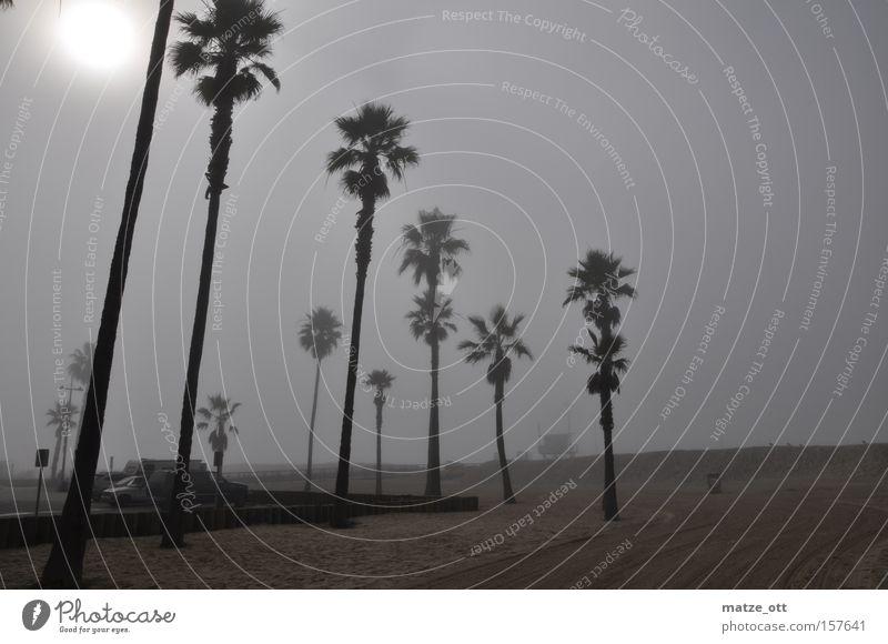 Sky Tree Sun Beach Vacation & Travel Coast Fog Weather USA Palm tree California Los Angeles