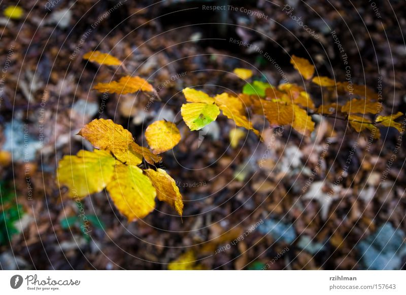 Nature Tree Leaf Autumn Illuminate Idyll Switzerland Autumn leaves Autumnal Autumnal colours Automn wood
