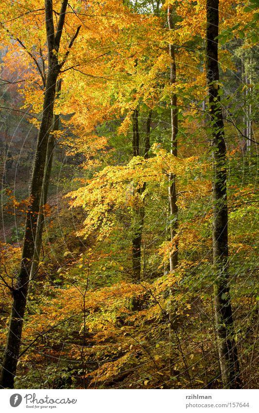 autumn forest Branch Tree trunk Leaf Colour Autumn Automn wood Seasons Plant Forest Multicoloured Autumnal herbs idyll Illuminate