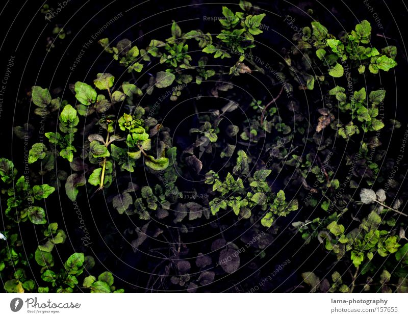 out of the dark Underwater photo Plant Leaf Green Dark green Deep The deep Aquatic plant Pattern Graphic Wallpaper Background picture