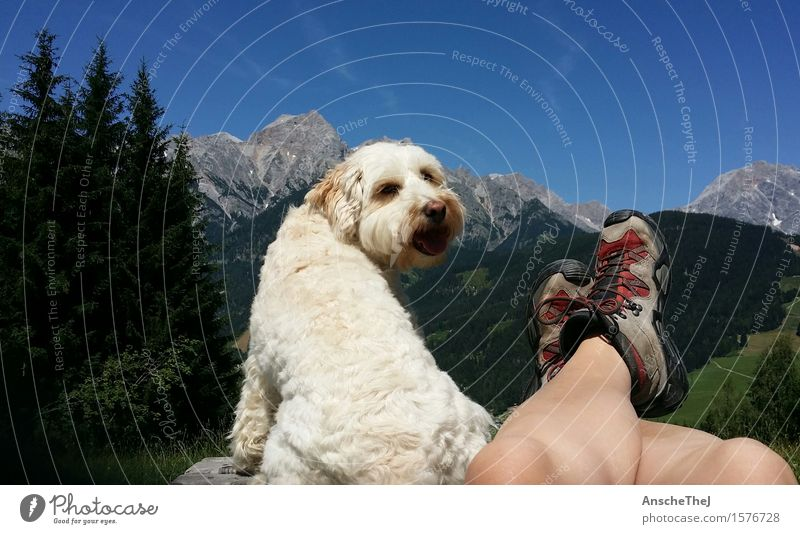 Happiness in the mountains Happy Healthy Athletic Relaxation Leisure and hobbies Vacation & Travel Trip Freedom Summer Summer vacation Mountain Hiking Break Dog