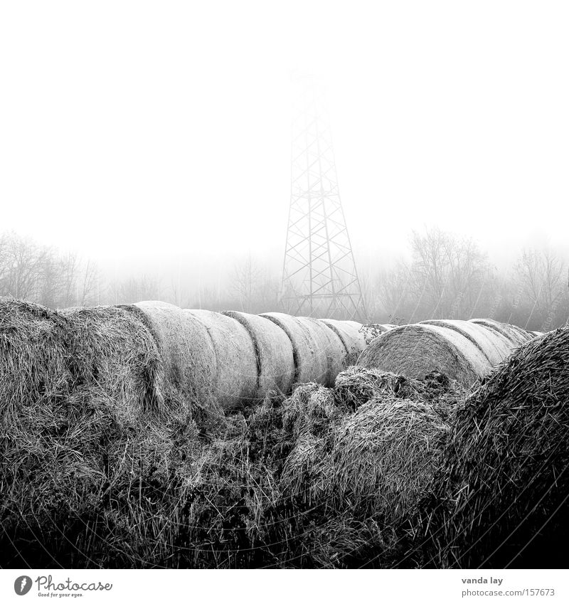 Foggy Field Straw Agriculture Round Bale of straw Hay bale Black & white photo Nature Environment Electricity Moody Morning Gray Loneliness Electricity pylon